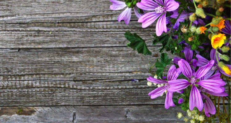 紫の花とテーブル