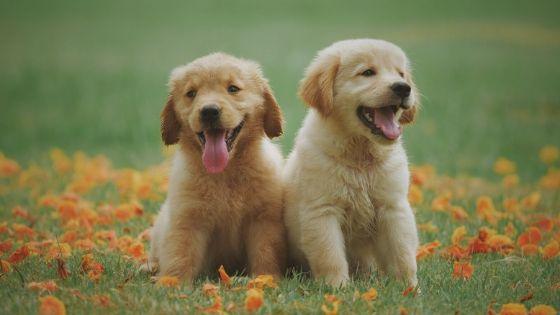 可愛い子犬2匹
