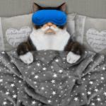 人前で話すことと睡眠の関係性